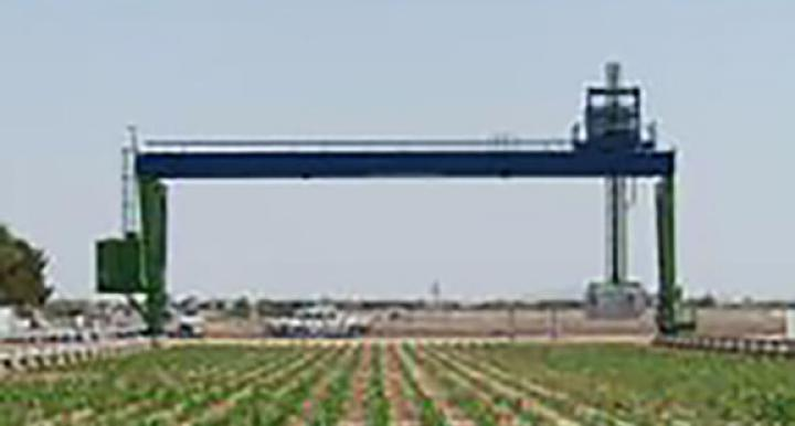 In the middle of a field of sorghum, near Maricopa, a giant robot is at work.
